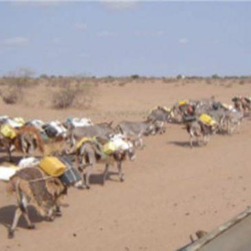 Projet Tana River Kenya 2009
